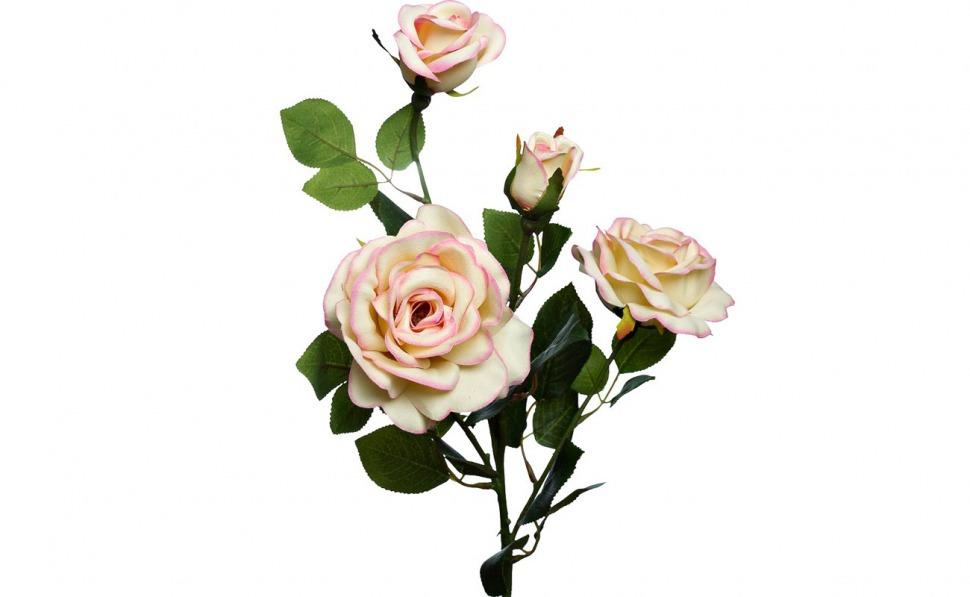 Заказ цветов в москве хризантема опт доставка цветов филадельфия